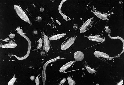 Офисный планктон что это такое